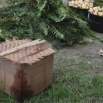 Cooking foods in a cedar box